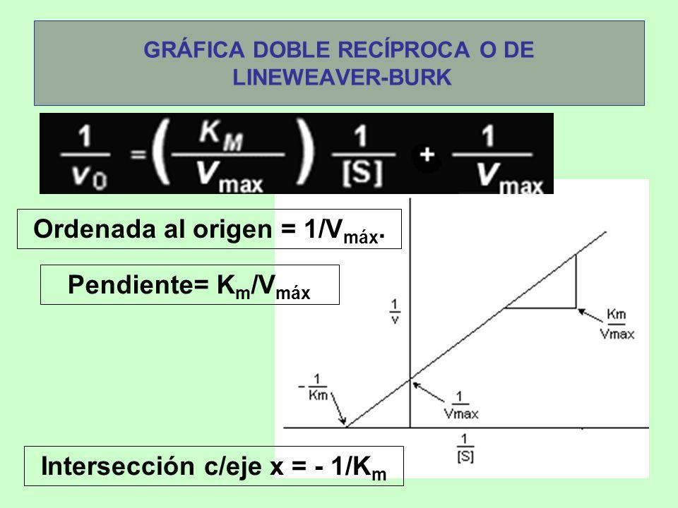 GRÁFICA DOBLE RECÍPROCA O DE LINEWEAVER-BURK Pendiente= K m /V máx Ordenada al origen = 1/V máx. Intersección c/eje x = - 1/K m