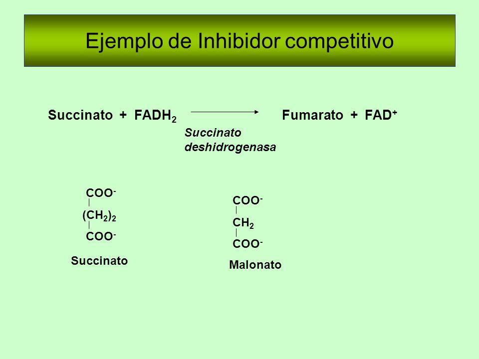 Ejemplo de Inhibidor competitivo COO - (CH 2 ) 2 COO - CH 2 COO - Succinato + FADH 2 Fumarato + FAD + Succinato deshidrogenasa Succinato Malonato