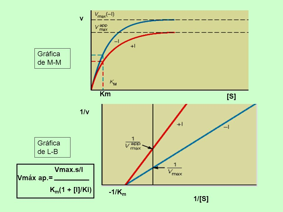 -1/K m 1/[S] 1/v Gráfica de L-B Km [S] v Gráfica de M-M Vmáx ap.= Vmax.s/I K m (1 + [I]/Ki)