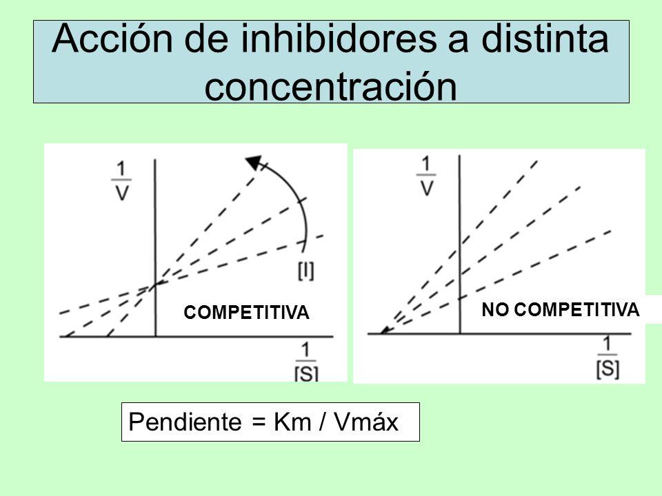 Acción de inhibidores a distinta concentración Pendiente = Km / Vmáx COMPETITIVA NO COMPETITIVA