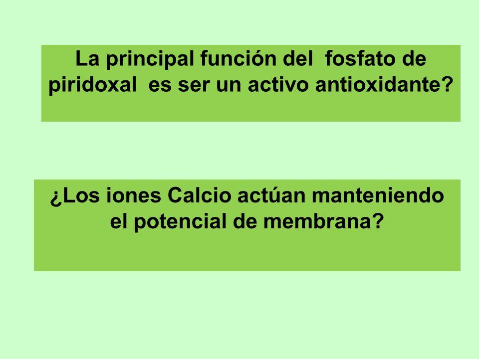 La principal función del fosfato de piridoxal es ser un activo antioxidante? ¿Los iones Calcio actúan manteniendo el potencial de membrana?