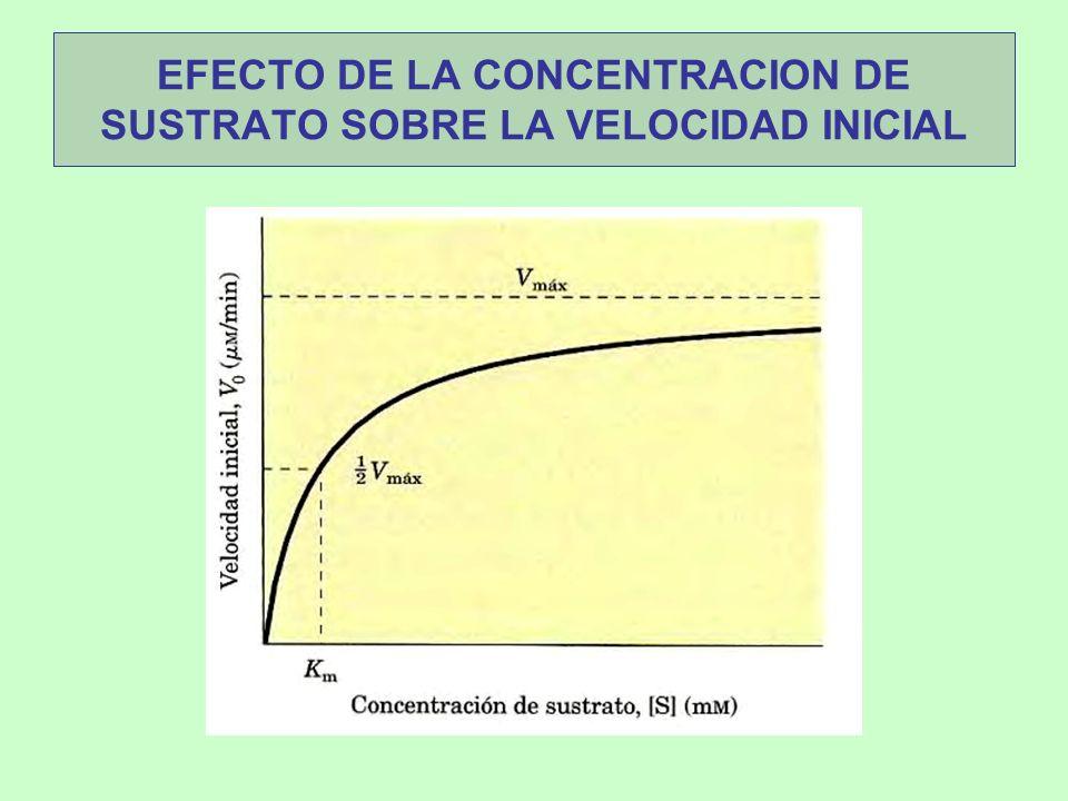 EFECTO DE LA CONCENTRACION DE SUSTRATO SOBRE LA VELOCIDAD INICIAL