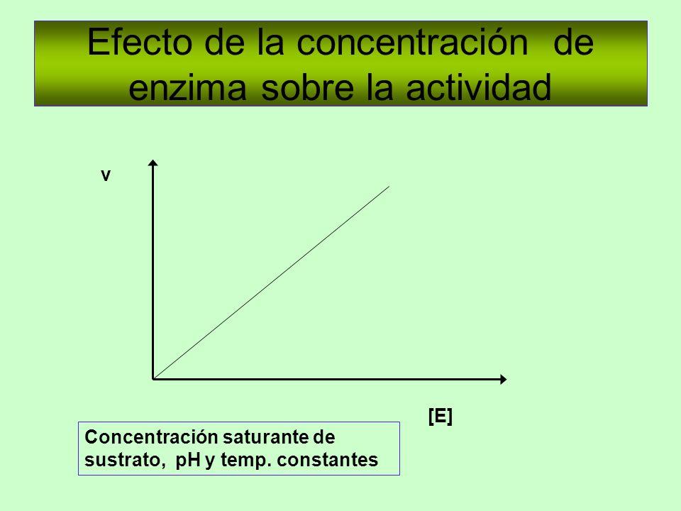 Efecto de la concentración de enzima sobre la actividad [E] v Concentración saturante de sustrato, pH y temp. constantes