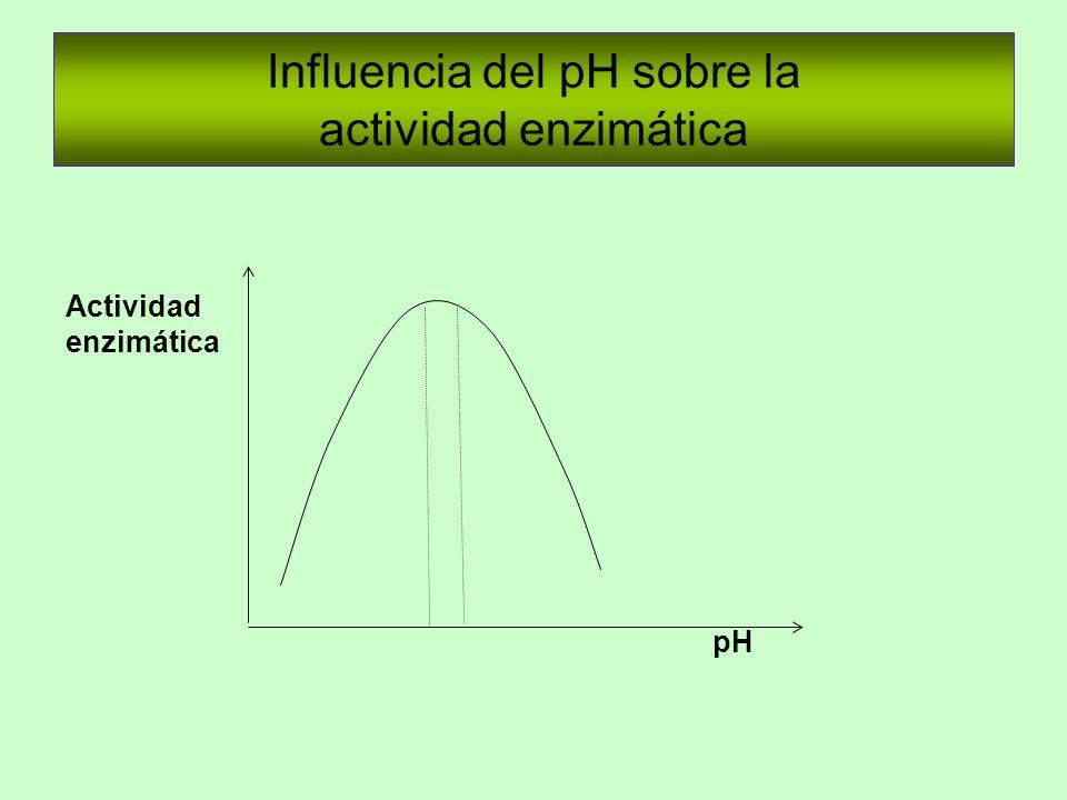 Influencia del pH sobre la actividad enzimática Actividad enzimática pH