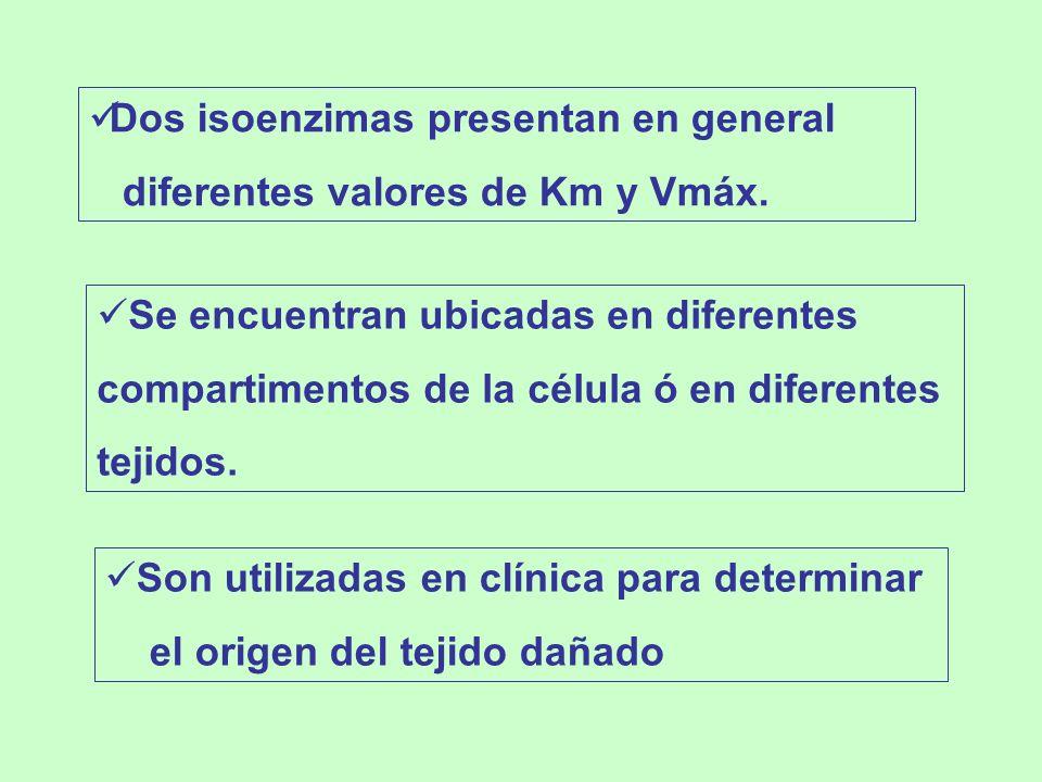 Son utilizadas en clínica para determinar el origen del tejido dañado Se encuentran ubicadas en diferentes compartimentos de la célula ó en diferentes