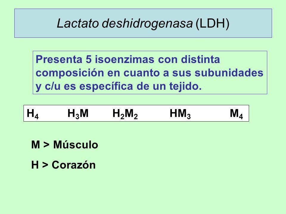 Lactato deshidrogenasa (LDH) Presenta 5 isoenzimas con distinta composición en cuanto a sus subunidades y c/u es específica de un tejido. H 4 H 3 MH 2