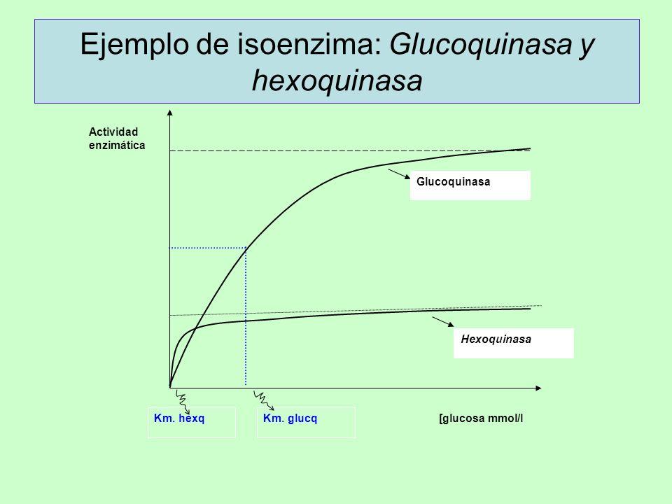 Ejemplo de isoenzima: Glucoquinasa y hexoquinasa Hexoquinasa Glucoquinasa Actividad enzimática Km. hexqKm. glucq [glucosa mmol/l