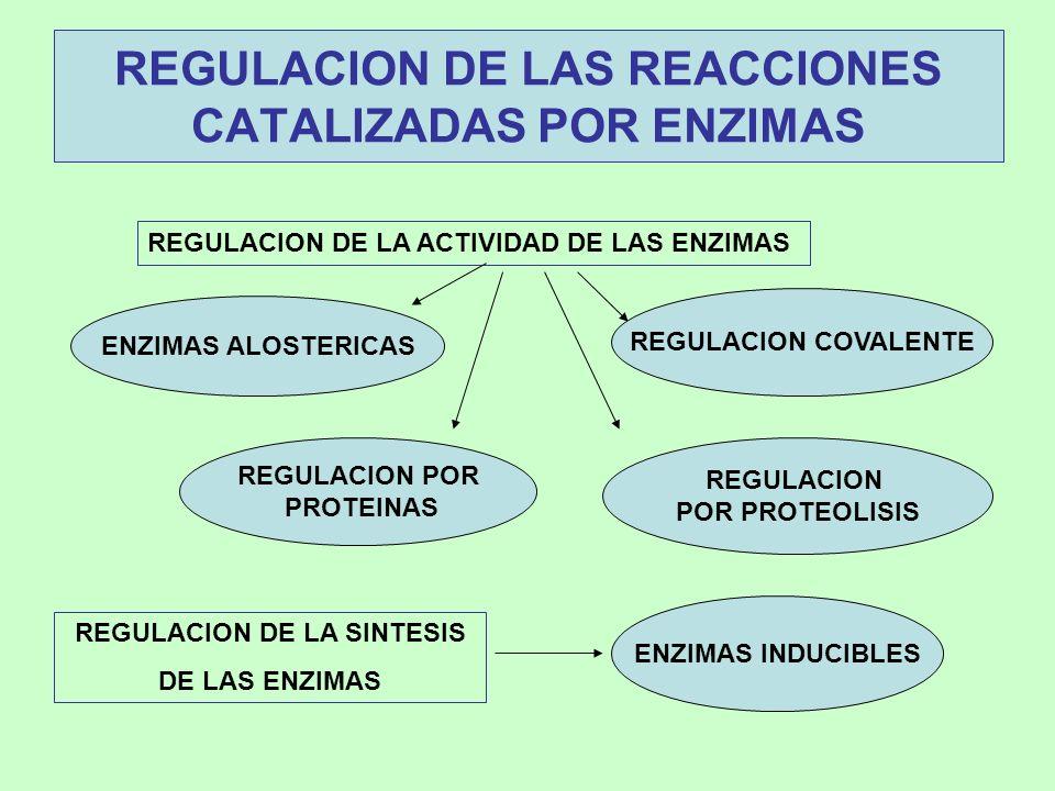 REGULACION DE LAS REACCIONES CATALIZADAS POR ENZIMAS REGULACION DE LA ACTIVIDAD DE LAS ENZIMAS REGULACION DE LA SINTESIS DE LAS ENZIMAS ENZIMAS INDUCI