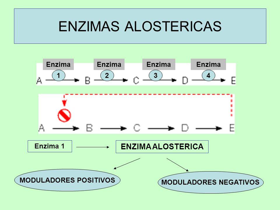 ENZIMAS ALOSTERICAS Enzima 1 ENZIMA ALOSTERICA MODULADORES POSITIVOS MODULADORES NEGATIVOS Enzima 1234