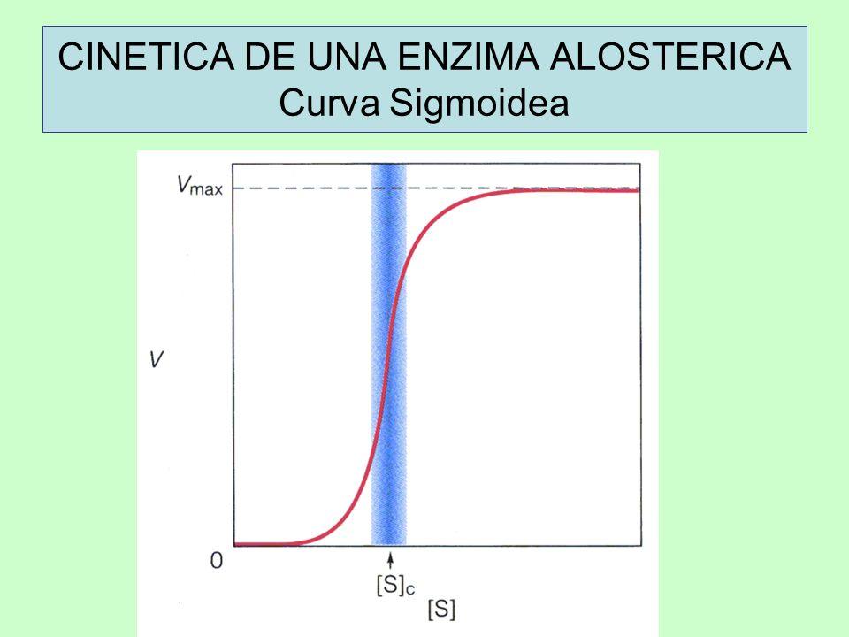 CINETICA DE UNA ENZIMA ALOSTERICA Curva Sigmoidea