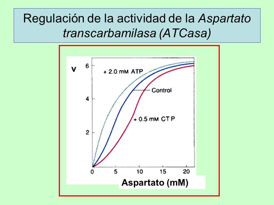 Regulación de la actividad de la Aspartato transcarbamilasa (ATCasa) v Aspartato (mM)