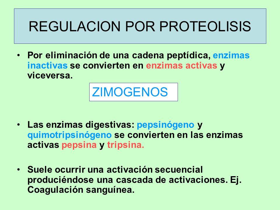REGULACION POR PROTEOLISIS Por eliminación de una cadena peptídica, enzimas inactivas se convierten en enzimas activas y viceversa. Las enzimas digest
