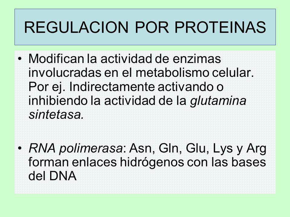 REGULACION POR PROTEINAS Modifican la actividad de enzimas involucradas en el metabolismo celular. Por ej. Indirectamente activando o inhibiendo la ac