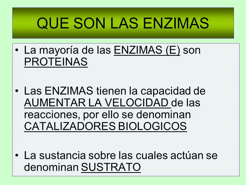 QUE SON LAS ENZIMAS La mayoría de las ENZIMAS (E) son PROTEINAS Las ENZIMAS tienen la capacidad de AUMENTAR LA VELOCIDAD de las reacciones, por ello s
