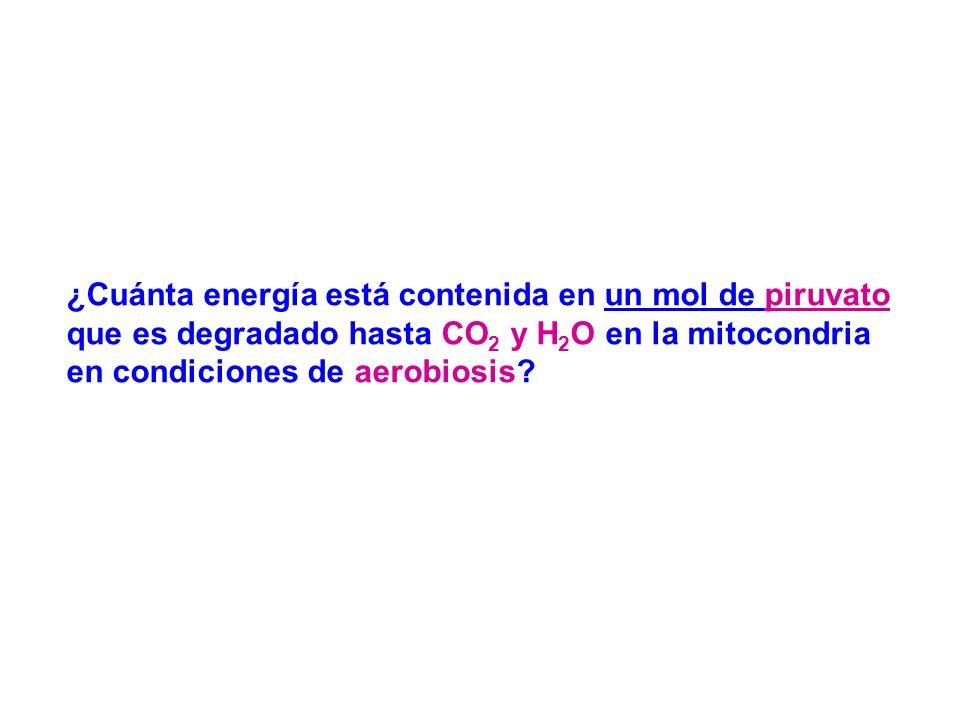 ¿Cuánta energía está contenida en un mol de piruvato que es degradado hasta CO 2 y H 2 O en la mitocondria en condiciones de aerobiosis?