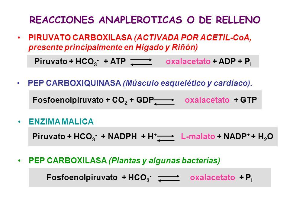 Fosfoenolpiruvato + HCO 3 - oxalacetato + P i PIRUVATO CARBOXILASA (ACTIVADA POR ACETIL-CoA, presente principalmente en Hígado y Riñón) REACCIONES ANA