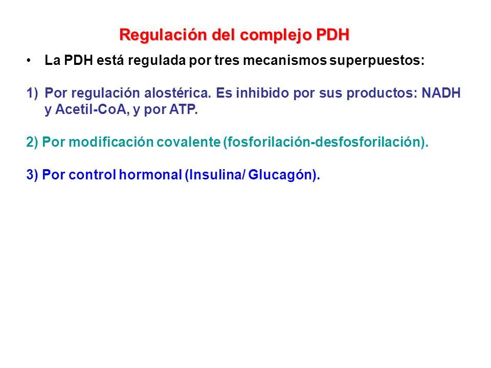 La PDH está regulada por tres mecanismos superpuestos: 1)Por regulación alostérica. Es inhibido por sus productos: NADH y Acetil-CoA, y por ATP. 2) Po