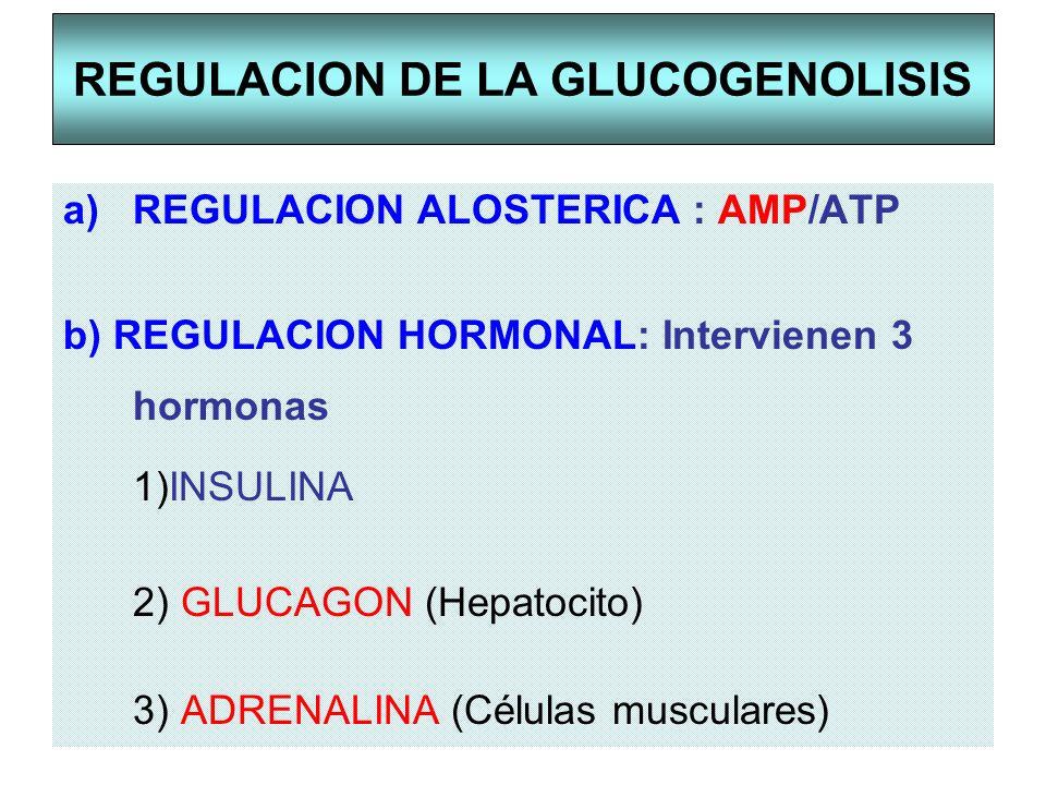 REGULACION DE LA GLUCOGENOLISIS a)REGULACION ALOSTERICA : AMP/ATP b) REGULACION HORMONAL: Intervienen 3 hormonas 1)INSULINA 2) GLUCAGON (Hepatocito) 3