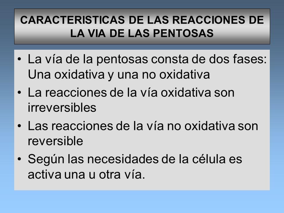 CARACTERISTICAS DE LAS REACCIONES DE LA VIA DE LAS PENTOSAS La vía de la pentosas consta de dos fases: Una oxidativa y una no oxidativa La reacciones