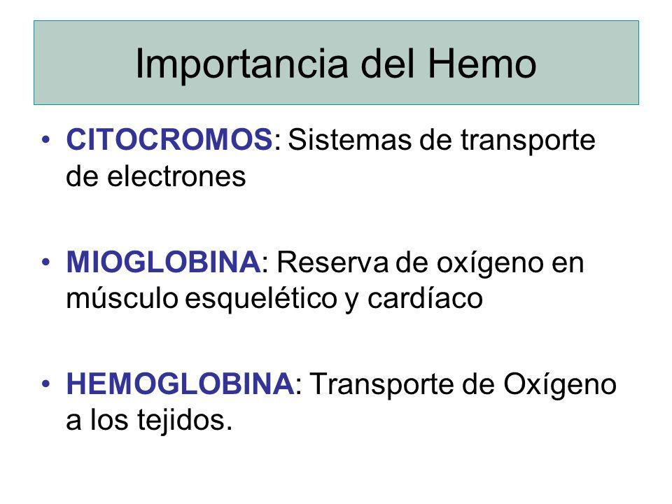 Importancia del Hemo CITOCROMOS: Sistemas de transporte de electrones MIOGLOBINA: Reserva de oxígeno en músculo esquelético y cardíaco HEMOGLOBINA: Tr