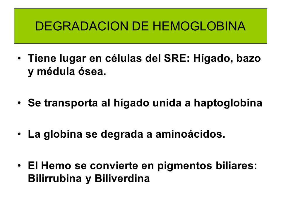 DEGRADACION DE HEMOGLOBINA Tiene lugar en células del SRE: Hígado, bazo y médula ósea. Se transporta al hígado unida a haptoglobina La globina se degr