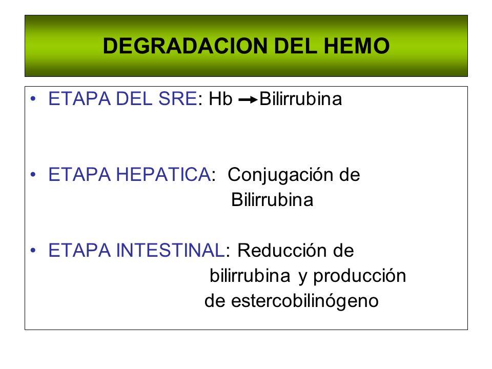 DEGRADACION DEL HEMO ETAPA DEL SRE: Hb Bilirrubina ETAPA HEPATICA: Conjugación de Bilirrubina ETAPA INTESTINAL: Reducción de bilirrubina y producción