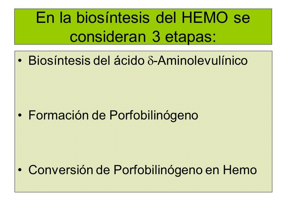 En la biosíntesis del HEMO se consideran 3 etapas: Biosíntesis del ácido -Aminolevulínico Formación de Porfobilinógeno Conversión de Porfobilinógeno e