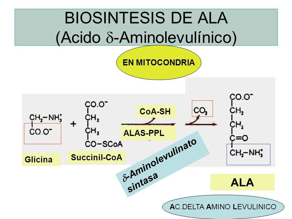 BIOSINTESIS DE ALA (Acido -Aminolevulínico) Glicina ALAS-PPL Succinil-CoA CoA-SH ALA -Aminolevulinato sintasa AC.DELTA AMINO LEVULINICO EN MITOCONDRIA