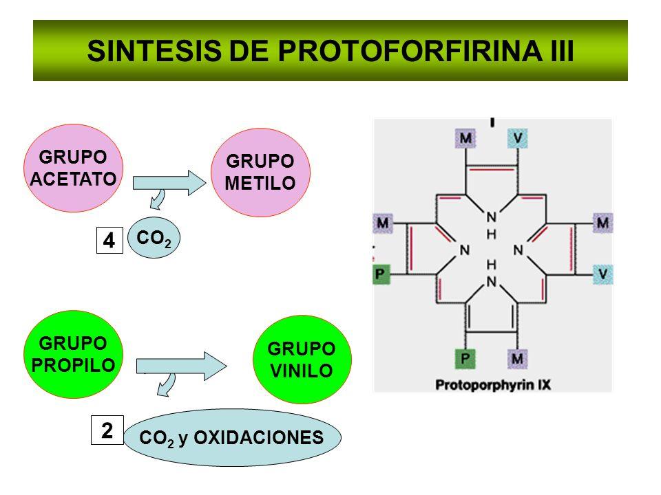 SINTESIS DE PROTOFORFIRINA III GRUPO ACETATO GRUPO PROPILO GRUPO METILO CO 2 4 CO 2 y OXIDACIONES 2 GRUPO VINILO