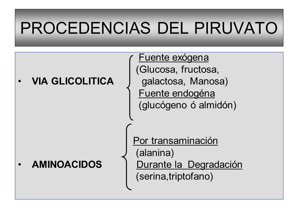REGULACIÓN DE LA GLUCONEOGÉNESIS Hormonal: Alostérica Glucagón Activa la Gluconeogénesis a nivel de la FBFasa Fructosa-1,6 bisfosfatasa (+) Acetil-CoA Piruvato carboxilasa (-) AMP y ADP