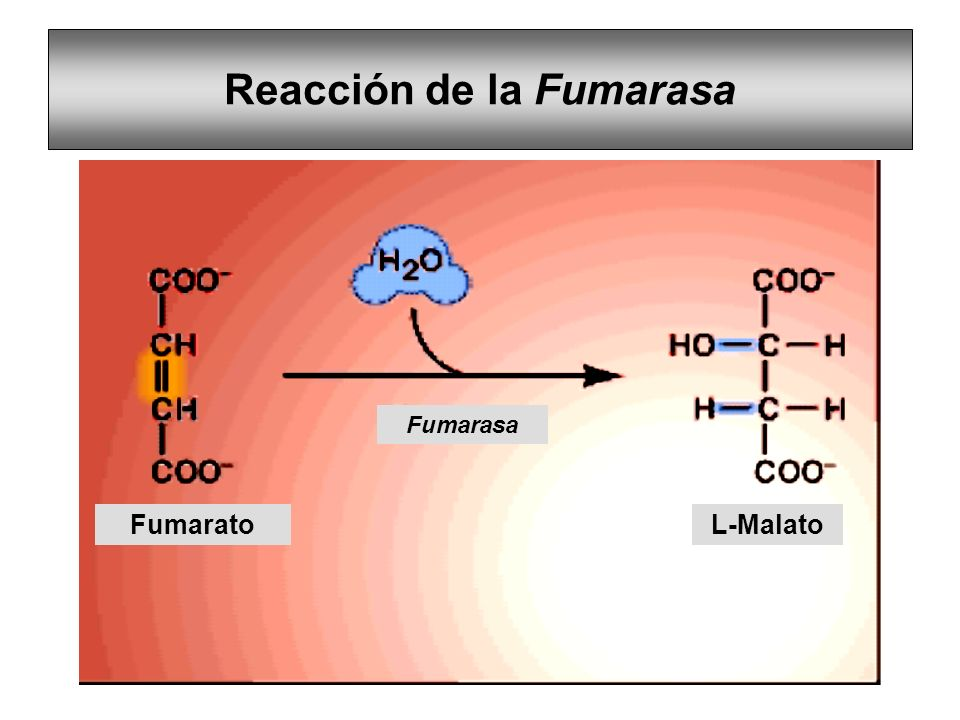 Reacción de la Fumarasa FumaratoL-Malato Fumarasa
