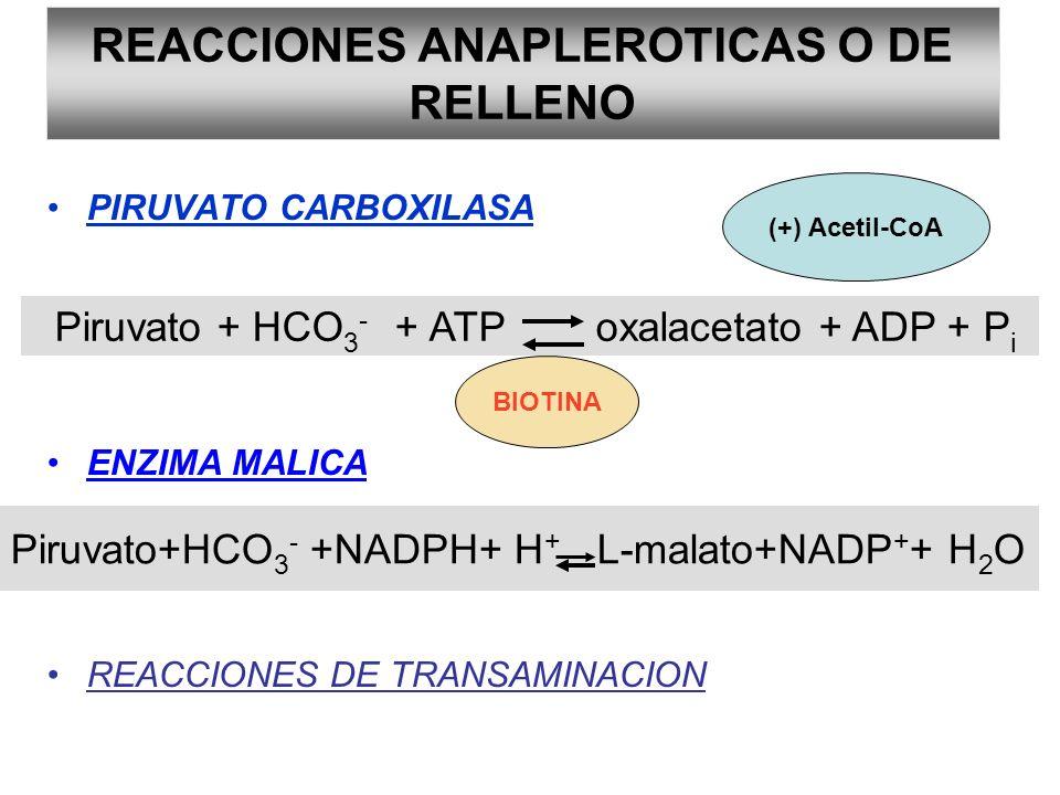 PIRUVATO CARBOXILASA ENZIMA MALICA REACCIONES DE TRANSAMINACION REACCIONES ANAPLEROTICAS O DE RELLENO Piruvato + HCO 3 - + ATP oxalacetato + ADP + P i