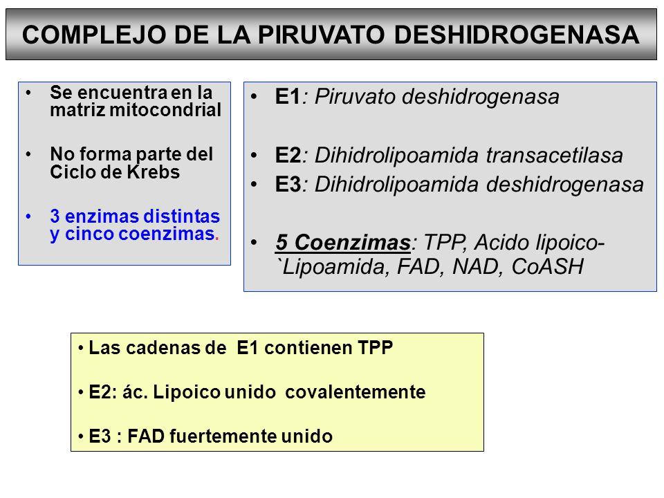 PIRUVATO CARBOXILASA ENZIMA MALICA REACCIONES DE TRANSAMINACION REACCIONES ANAPLEROTICAS O DE RELLENO Piruvato + HCO 3 - + ATP oxalacetato + ADP + P i Piruvato+HCO 3 - +NADPH+ H + L-malato+NADP + + H 2 O BIOTINA (+) Acetil-CoA