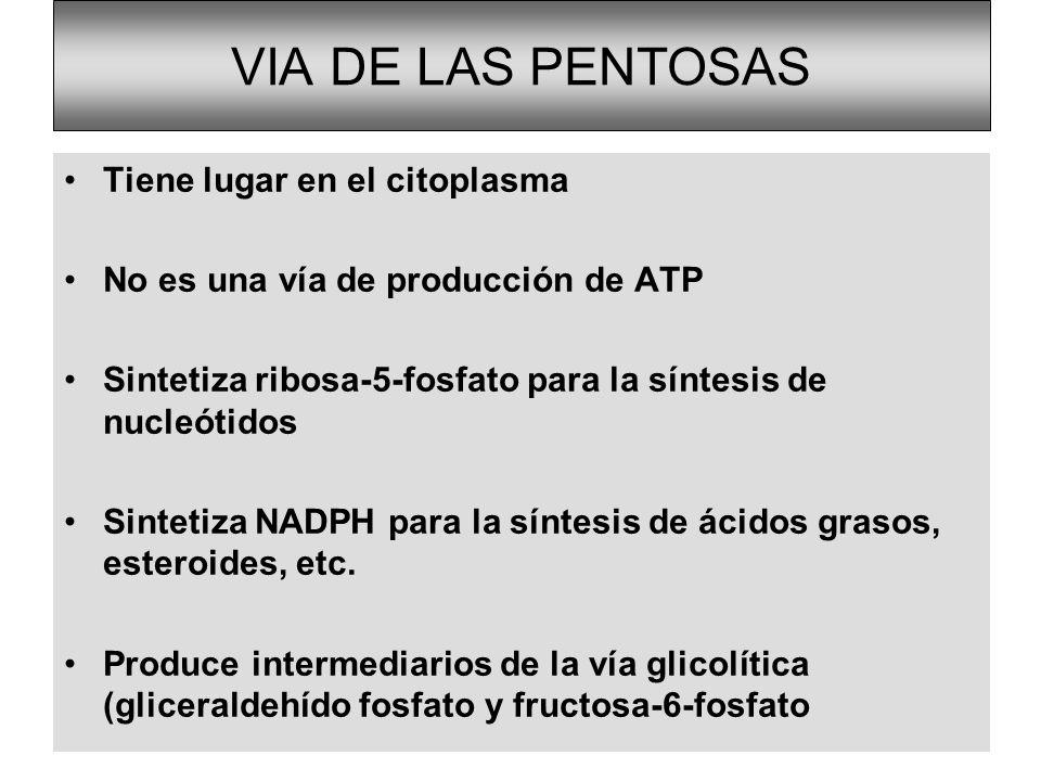 VIA DE LAS PENTOSAS Tiene lugar en el citoplasma No es una vía de producción de ATP Sintetiza ribosa-5-fosfato para la síntesis de nucleótidos Sinteti