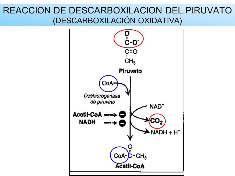 REACCION DE DESCARBOXILACION DEL PIRUVATO (DESCARBOXILACIÓN OXIDATIVA)