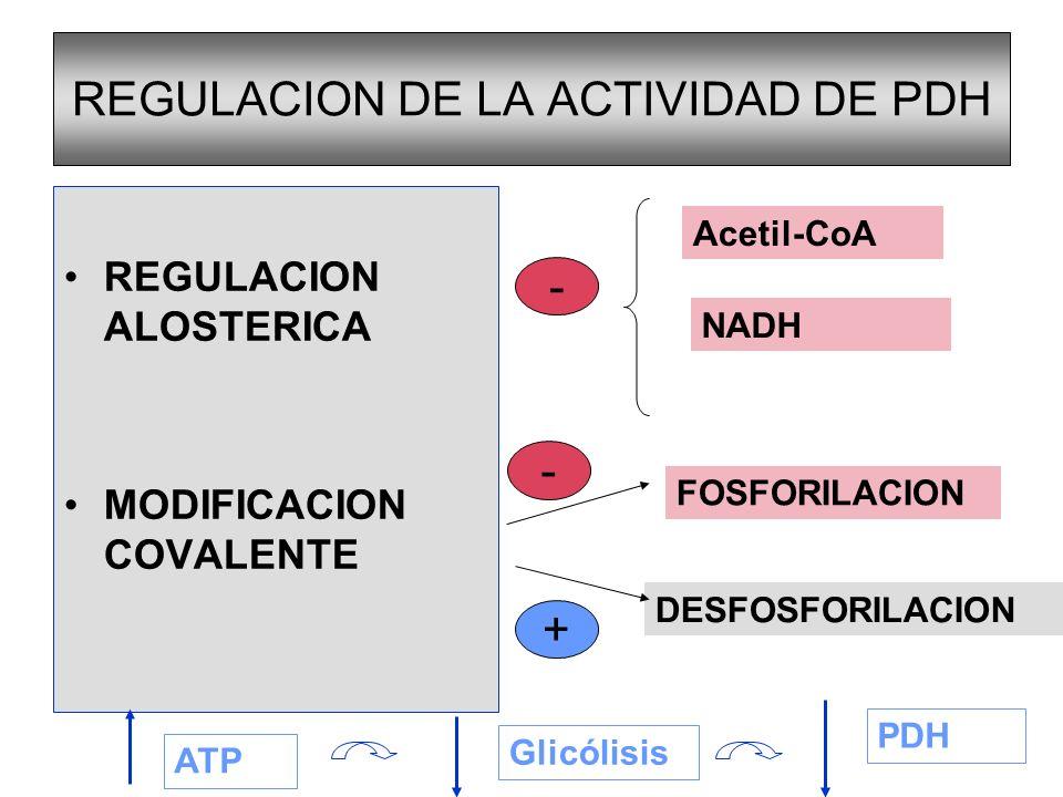 DESTINO DE LOS PRODUCTOS DE LA DESCARBOXILACION OXIDATIVA DE PIRUVATO ACETIL- CoA NADH CADENA RESPIRATORIA 3 ATP CICLO DE KREBS CO 2 + H 2 O 3 NADH 1 FADH 2 FOSF OXID.