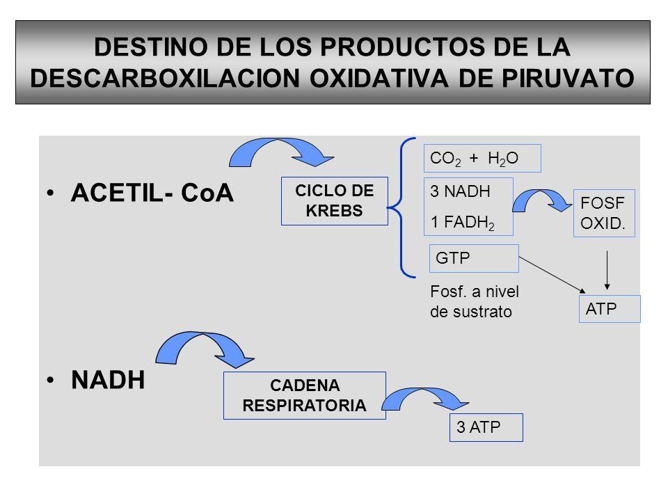 DESTINO DE LOS PRODUCTOS DE LA DESCARBOXILACION OXIDATIVA DE PIRUVATO ACETIL- CoA NADH CADENA RESPIRATORIA 3 ATP CICLO DE KREBS CO 2 + H 2 O 3 NADH 1