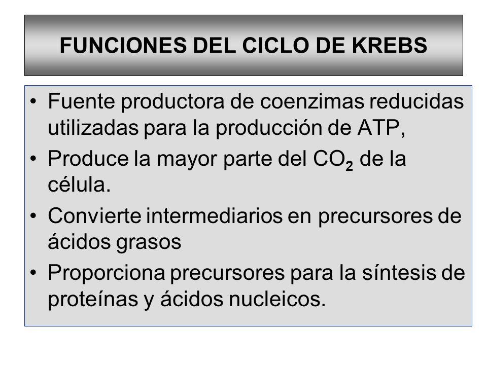 FUNCIONES DEL CICLO DE KREBS Fuente productora de coenzimas reducidas utilizadas para la producción de ATP, Produce la mayor parte del CO 2 de la célu
