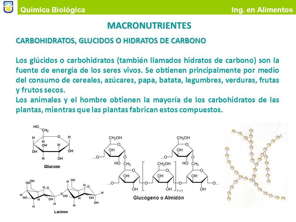 Algunos hidratos de carbono: monosacáridos Glucosa Fructosa galactosa