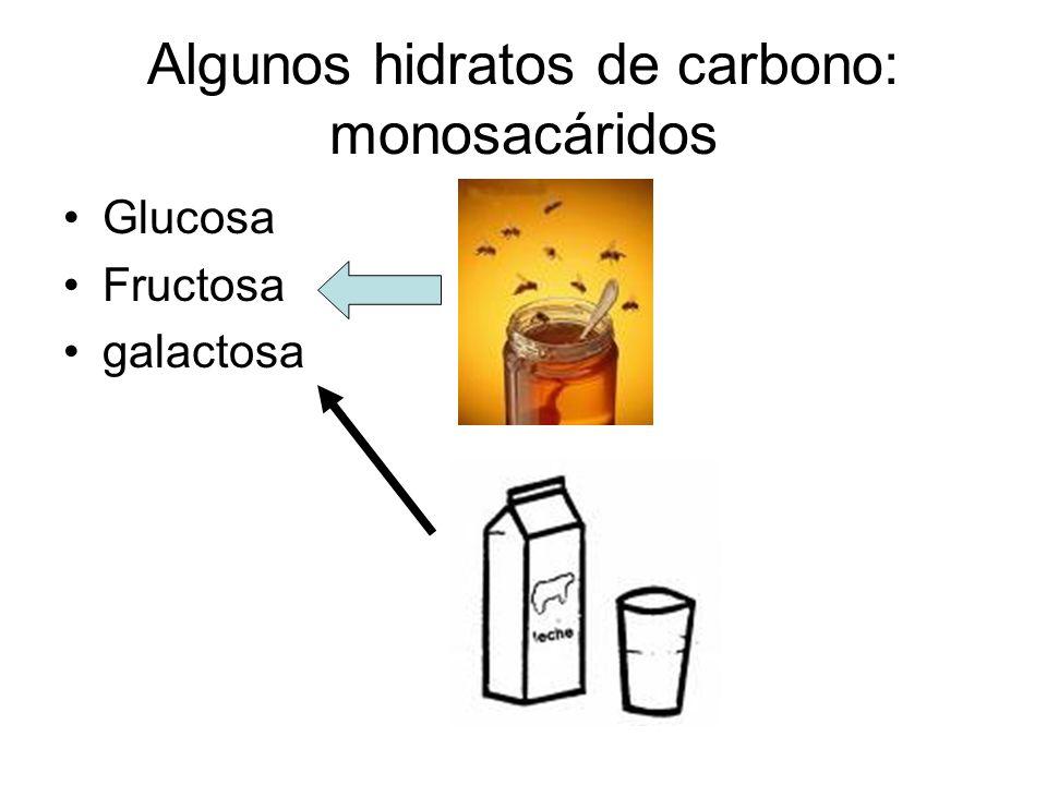 Más hidratos de carbono: disacáridos Maltosa Lactosa sacarosa