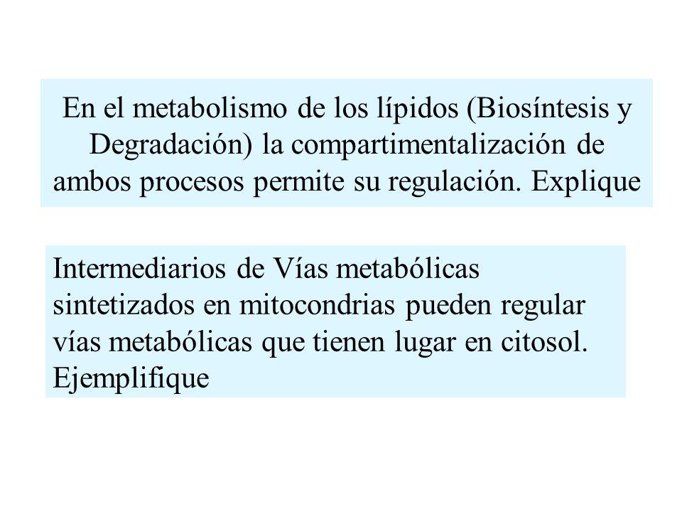 En el metabolismo de los lípidos (Biosíntesis y Degradación) la compartimentalización de ambos procesos permite su regulación. Explique Intermediarios