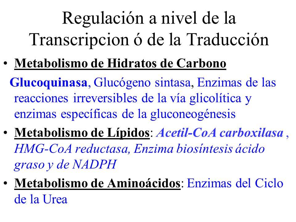 Regulación a nivel de la Transcripcion ó de la Traducción Metabolismo de Hidratos de Carbono Glucoquinasa, Glucógeno sintasa, Enzimas de las reaccione