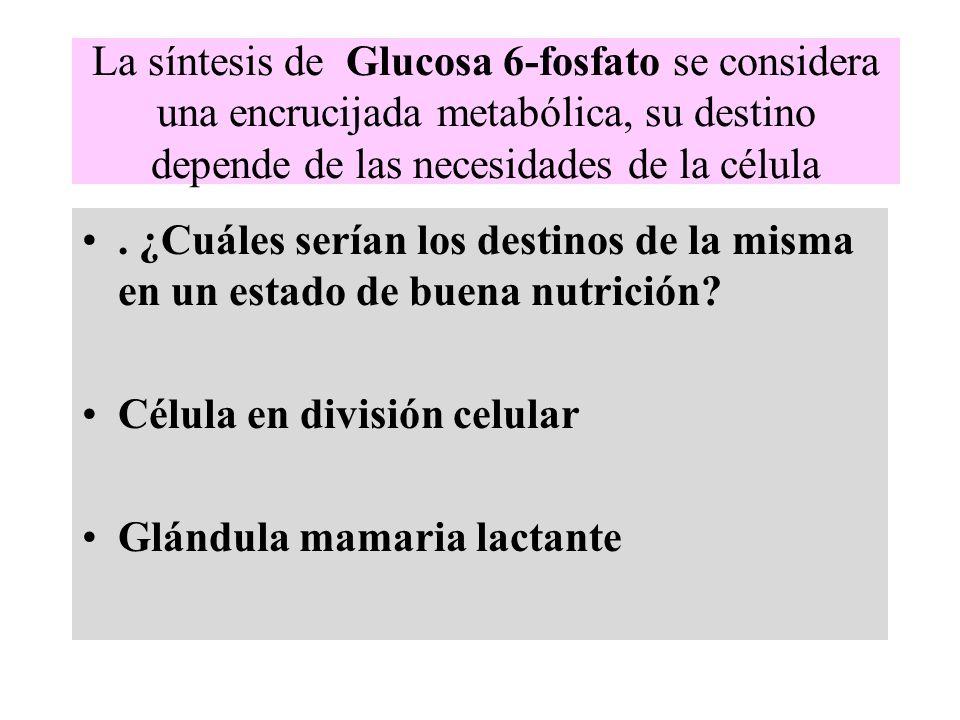 La síntesis de Glucosa 6-fosfato se considera una encrucijada metabólica, su destino depende de las necesidades de la célula. ¿Cuáles serían los desti