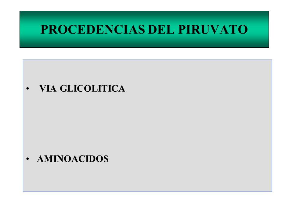 PROCEDENCIAS DEL PIRUVATO VIA GLICOLITICA AMINOACIDOS