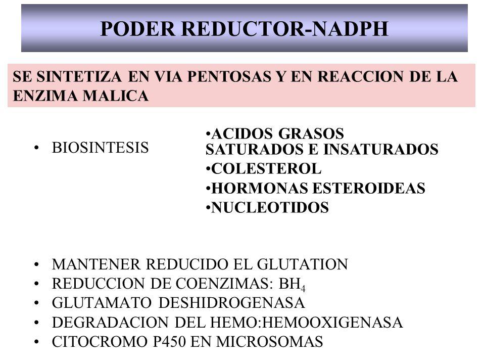 PODER REDUCTOR-NADPH BIOSINTESIS MANTENER REDUCIDO EL GLUTATION REDUCCION DE COENZIMAS: BH 4 GLUTAMATO DESHIDROGENASA DEGRADACION DEL HEMO:HEMOOXIGENA
