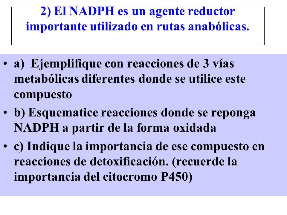 2) El NADPH es un agente reductor importante utilizado en rutas anabólicas. a) Ejemplifique con reacciones de 3 vías metabólicas diferentes donde se u