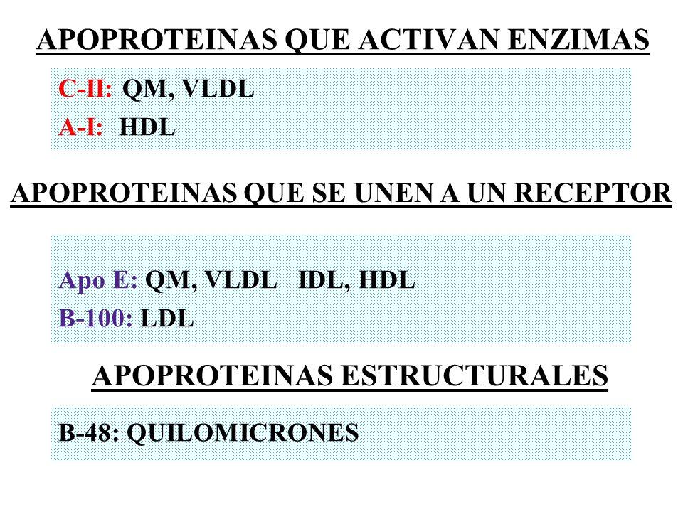 C-II: QM, VLDL A-I: HDL Apo E: QM, VLDL IDL, HDL B-100: LDL B-48: QUILOMICRONES APOPROTEINAS QUE ACTIVAN ENZIMAS APOPROTEINAS QUE SE UNEN A UN RECEPTO