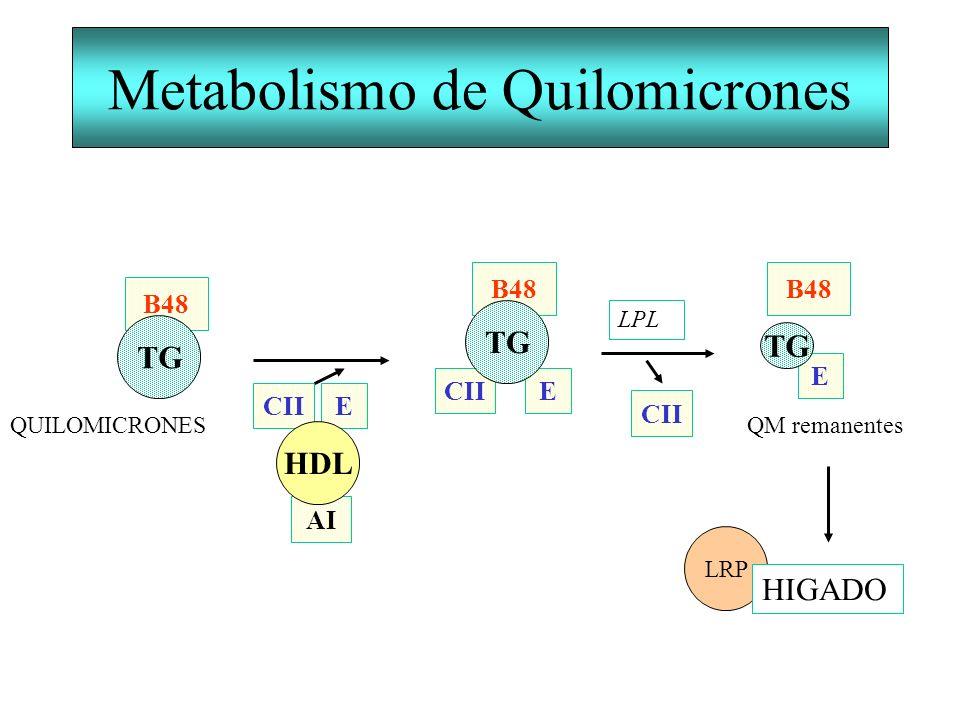 Metabolismo de Quilomicrones E CII B48 TG AI CII E HDL LPL B48 TG QUILOMICRONES E B48 TG QM remanentes LRP HIGADO CII