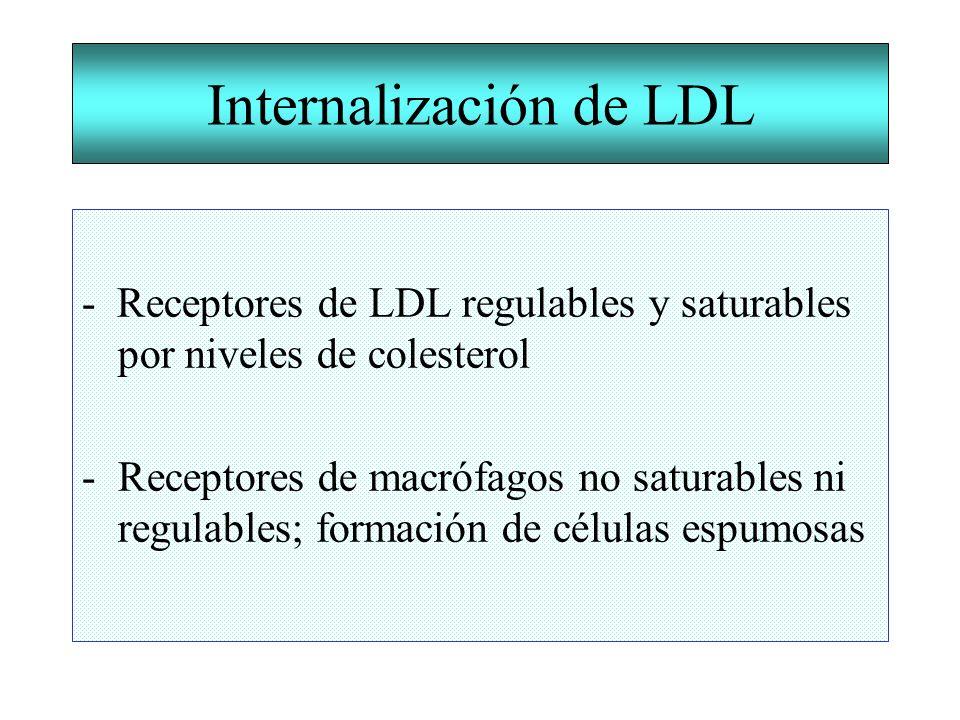 Internalización de LDL - Receptores de LDL regulables y saturables por niveles de colesterol -Receptores de macrófagos no saturables ni regulables; fo