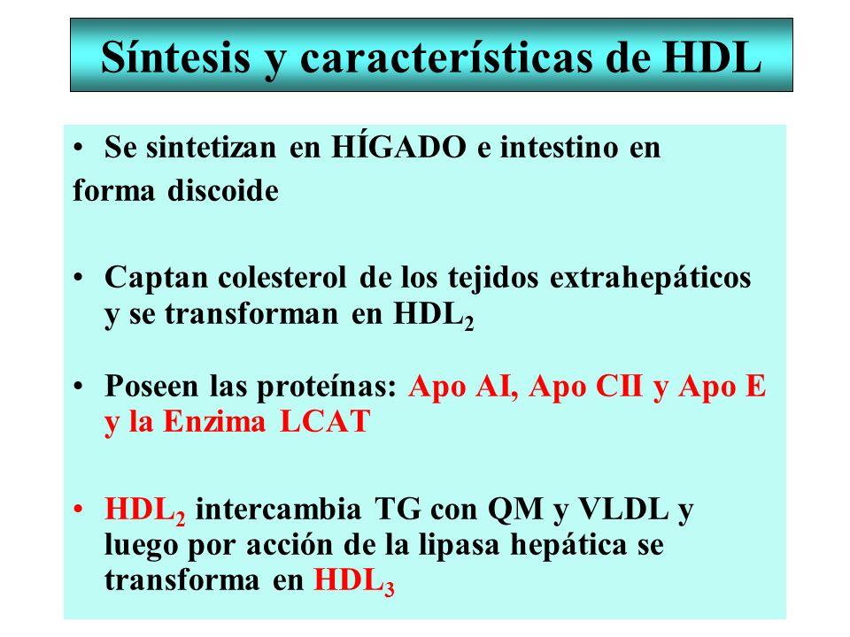 Síntesis y características de HDL Se sintetizan en HÍGADO e intestino en forma discoide Captan colesterol de los tejidos extrahepáticos y se transform